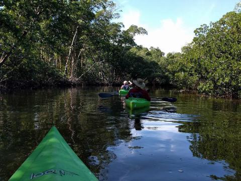 フロリダ州サニベル島の J.N.ディン・ダーリン国立野生動物保護区で楽しむカヤック
